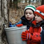 Maple Sugaring Field Trips